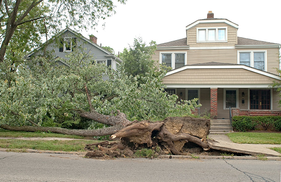 reducing tree damage around the home